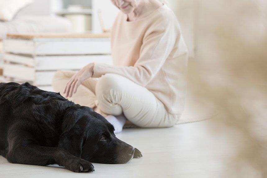mascotas_salud_cardio_terapia