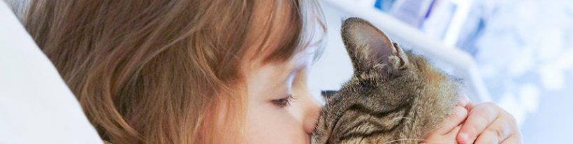 tener-un-gato-mejora-la-salud-del-corazon